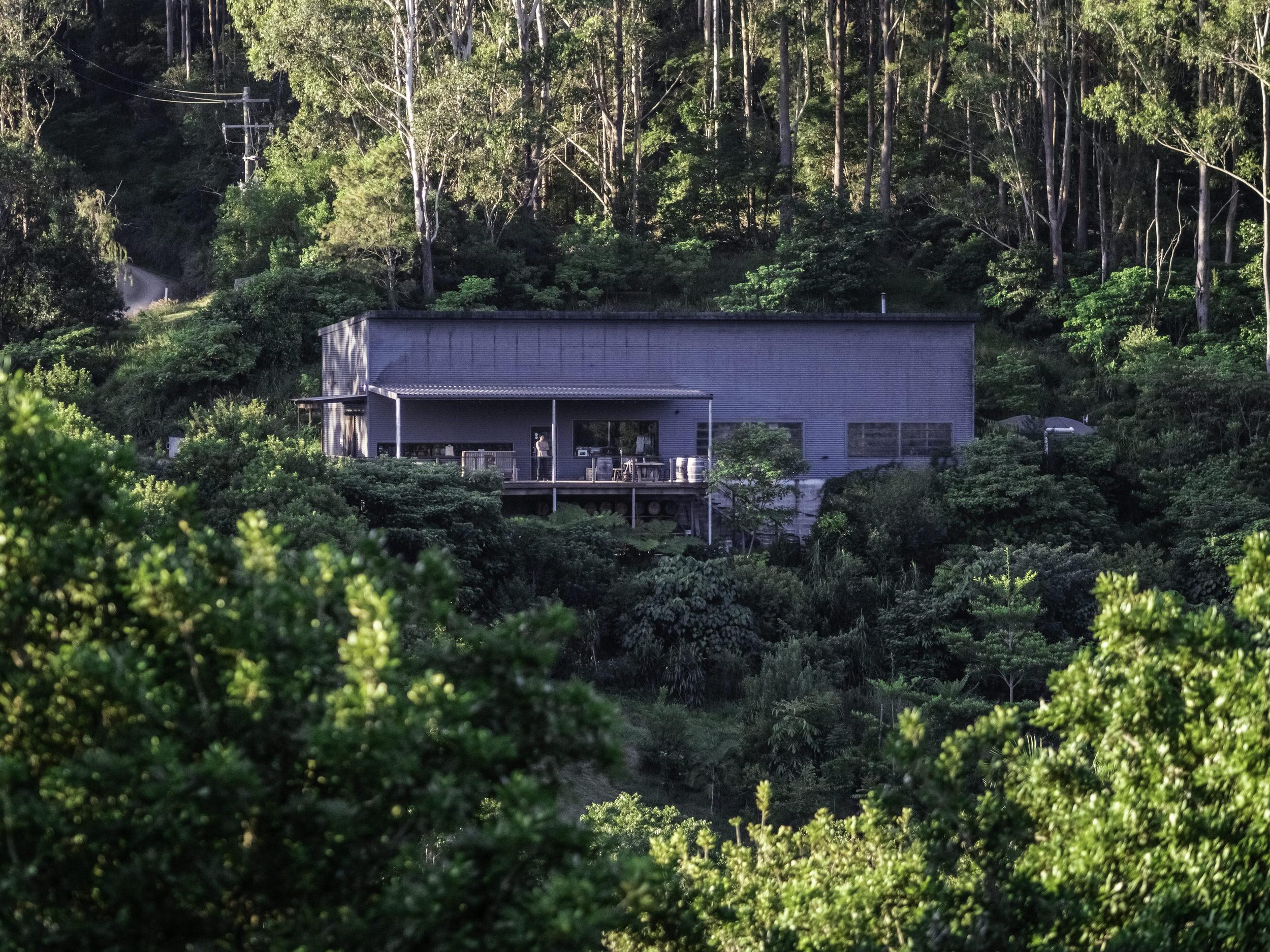 Cape Byron Distillery Rainforest Tour and Tasting