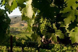 #SauvBlanc Day - A reason to drink Sauvignon Blanc...