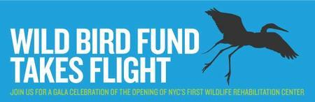 Wild Bird Fund Takes Flight