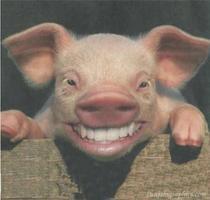 REDNECK (BLANK) ,PIG ROAST, MUSIC FESTIVAL