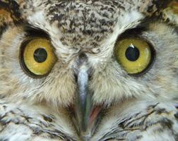 Audubon Society of Rhode Island Raptor Weekend 2011