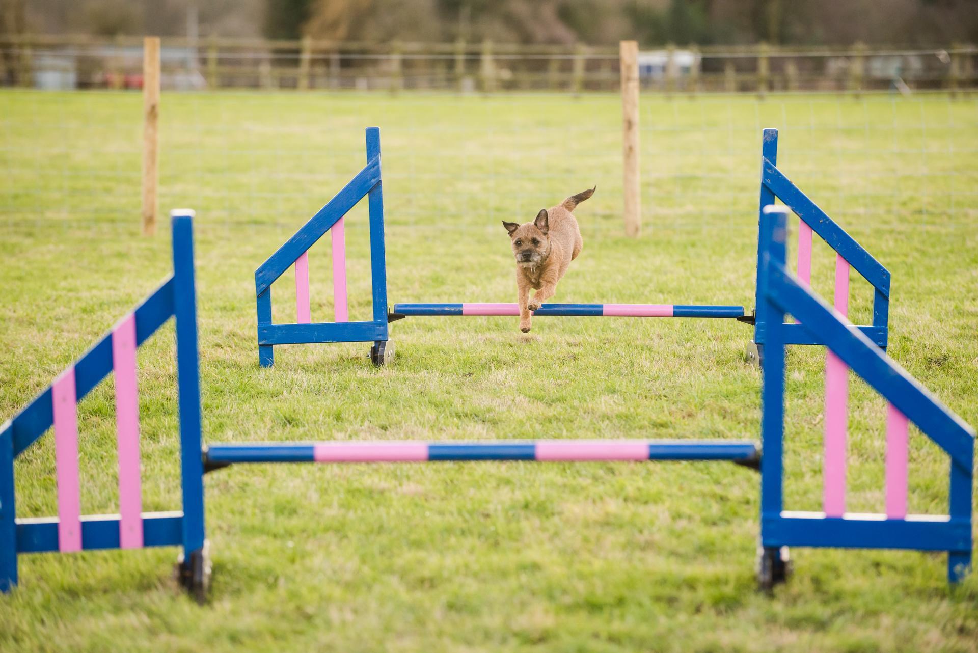 Beginners Dog Agility -8 Week Course