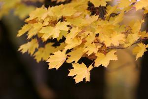 Sacramento Bee fall leaves photography class