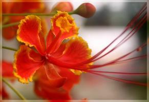 Open Evening: Botany