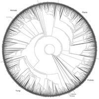 Evolutionary Biology Journal Club: Season 2, Meeting 1