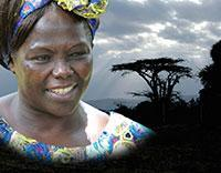 Taking Root:  The Vision of Wangari Maathai - Film...