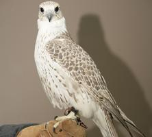 Tweet the Falcons