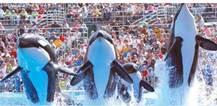 Sea World Tour