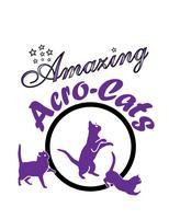 For the first time ever! The Amazing Acro-Cats Perform at...