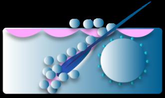 Nanodermatology Society Annual Meeting
