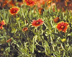 Florida-Friendly Garden Tours at Florida Botanical Gardens
