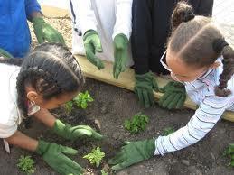 School Garden Tour- Begins at Veggieloution Community...