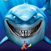 Sharkfest 2013