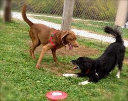 Pooch Party in the Play Yards
