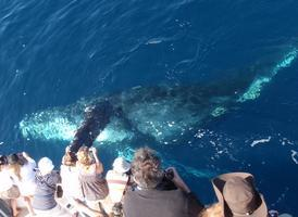 $20 Blue Whale Watching Cruise Special Summer/Fall 2012