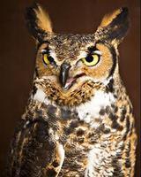 Horizon Wings Raptor Rehabilitation and Education prese...