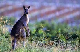Let's go to Australia! - July 31