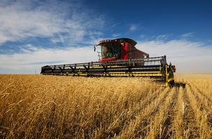 Agriculture: Moorhead