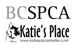 Maple Ridge Community Cat Discussion