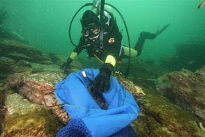 Kelp Project Diving