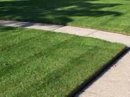 Turfgrass Care: Best Practices and Troubleshooting