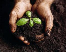 Soil Foodweb
