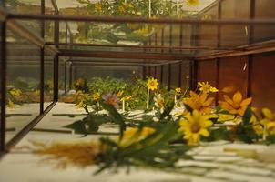 Cambridge Slow Art Day The Glass Flowers Collection  -...