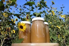 Keeping Honeybees