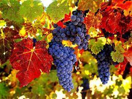 Wine Seminar at the Wine Cellar Club Irvine