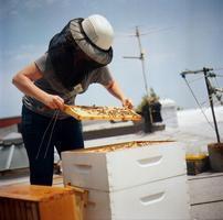 Urban/ Suburban Beekeeping 101 Online Seminar w/ Brooklyn...