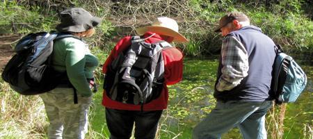 Dundas Valley - The Ponds Walk