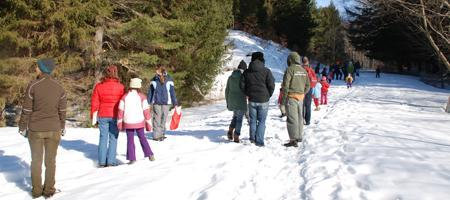 Winter Ecology Walk and Exploration