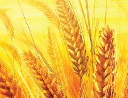 8th Annual Organic Grain & Vegetable Production Meeting