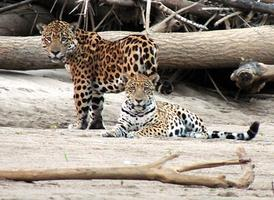 Manu Park - the Last Refuge of the Amazon