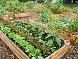 Community Garden Forum