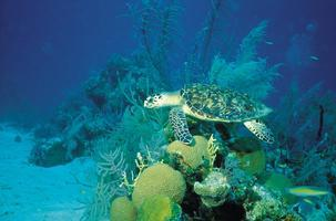Going Coastal: Coral Reef Classroom