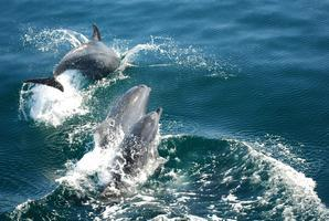 Flipping for Dolphins