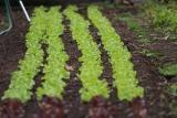 Write a Practical Food Safety Plan for Your Farm!