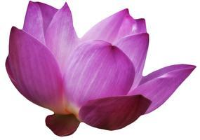 Learn Reiki Level One at Wellsprings