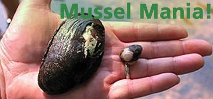Mussel Mania!