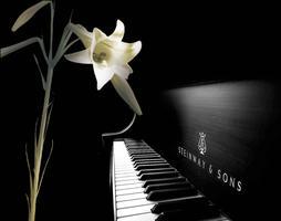 228 Memorial Concert