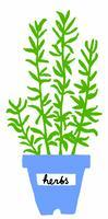 Meet Your Maker: Growing Series - Herbs for Use &...