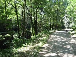 Parkinson's Hike: 3 mile in Portland, June