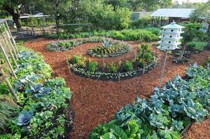 Healing Garden Creation A Basic Gardening Skills Class
