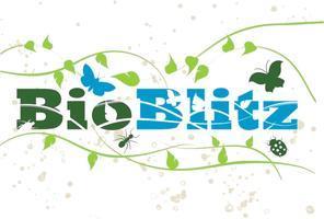Bioblitz - Moth trap release walk at Wandlebury...