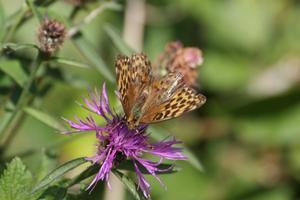 Plants and Pollinators Walk