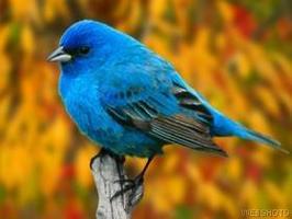 San Jose Bird Mart 12/07/14