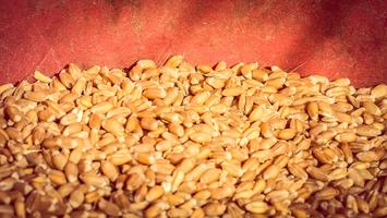 Whole Grains and the Mighty Chickpea