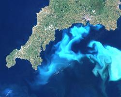 How does acidification affect our oceans?
