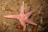 GLUG diving trip - Weymouth May 2015